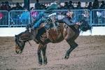 rodeo-2017-0744-blog