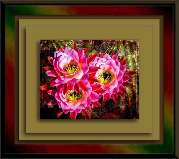 April Cactus Flowers-1122 art blog