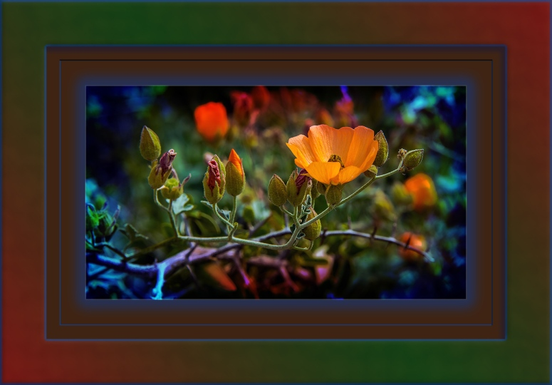 Caliche globemallow-6405 art blog
