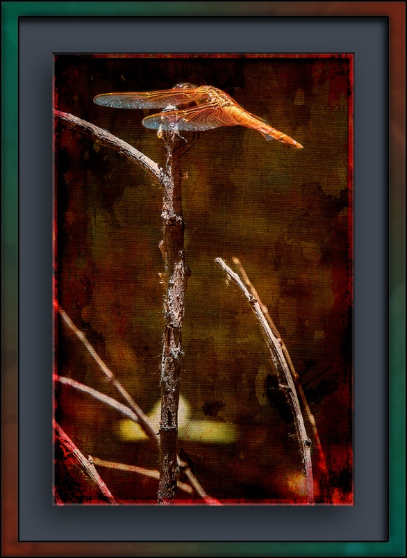 Dragonfly red flame-1333 grunge art blog
