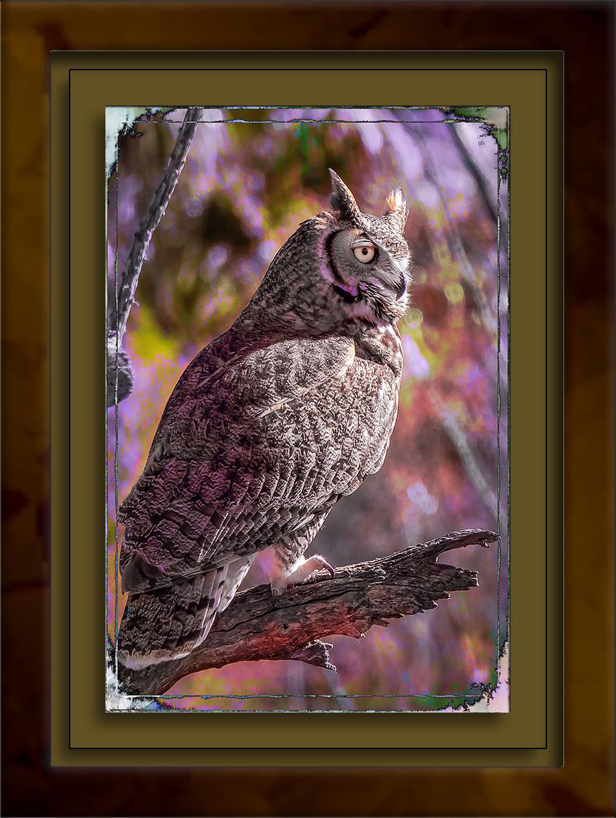 Great Horn Owl-1013 art blog