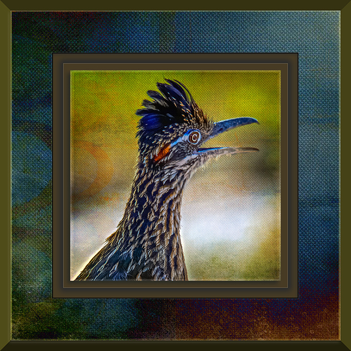 Greater Road Runner-Art blog