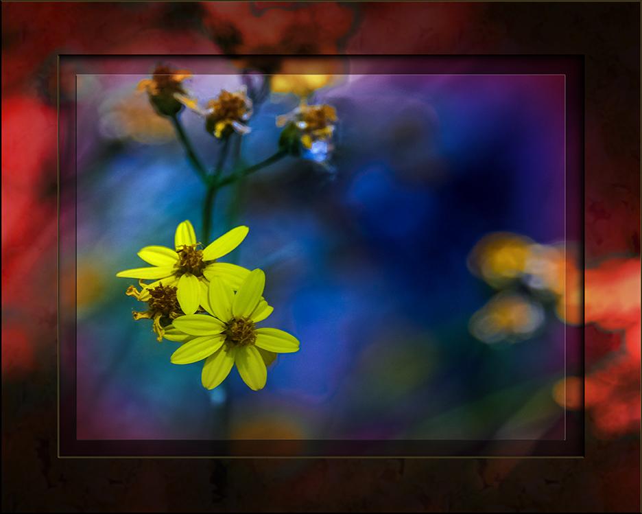 Heartleaf Goldeneye-1256 art blog