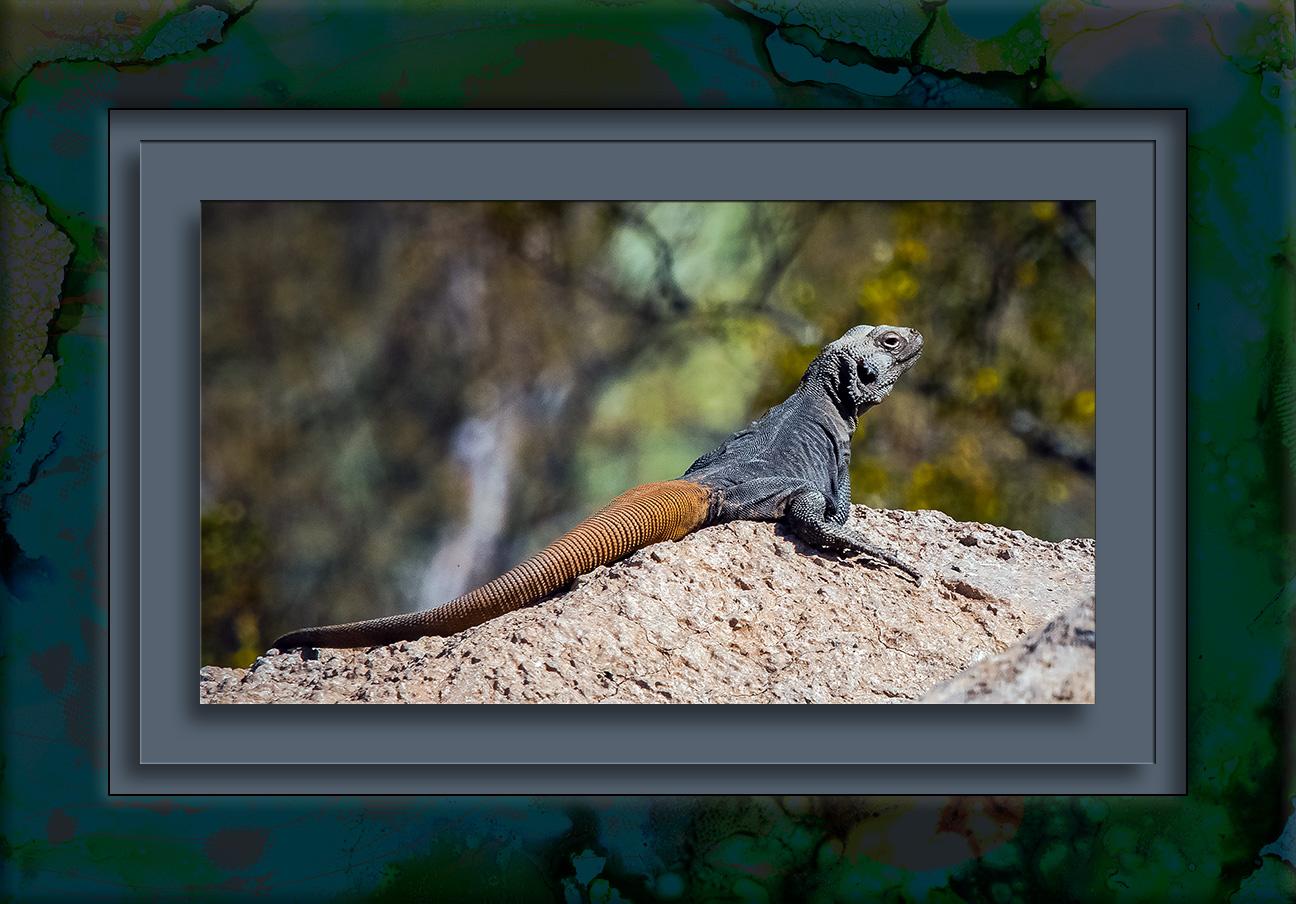 Lizard-1027 blog