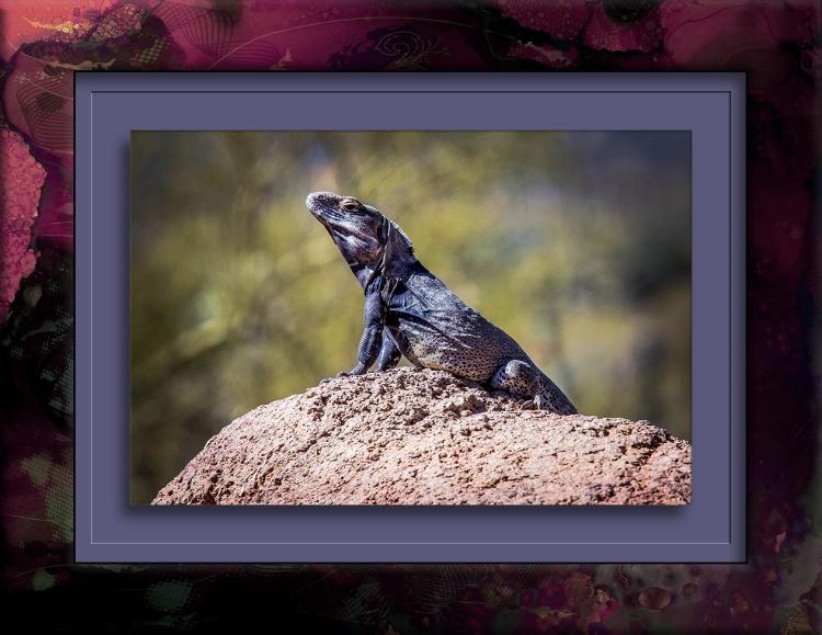 Lizard-1031 blog