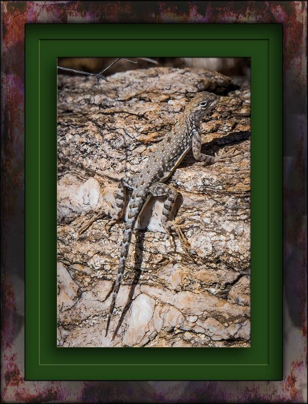 Lizard-1121 blog