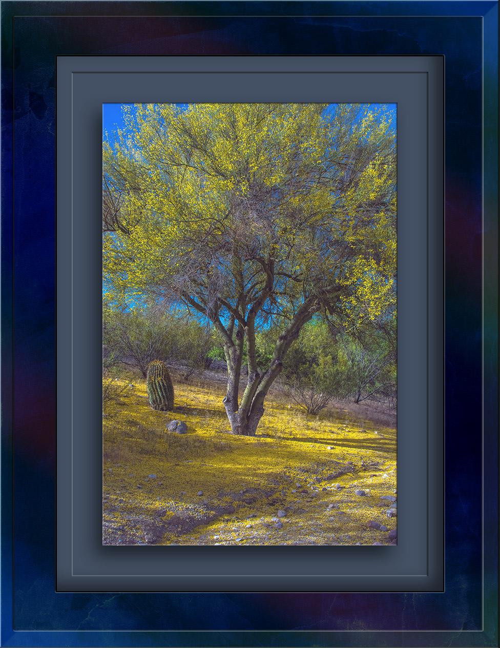 Palo Verde Blossoms Fall-1197 blog