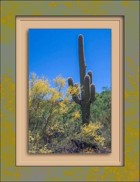 Palo Verde & Saguaro-1334 blog