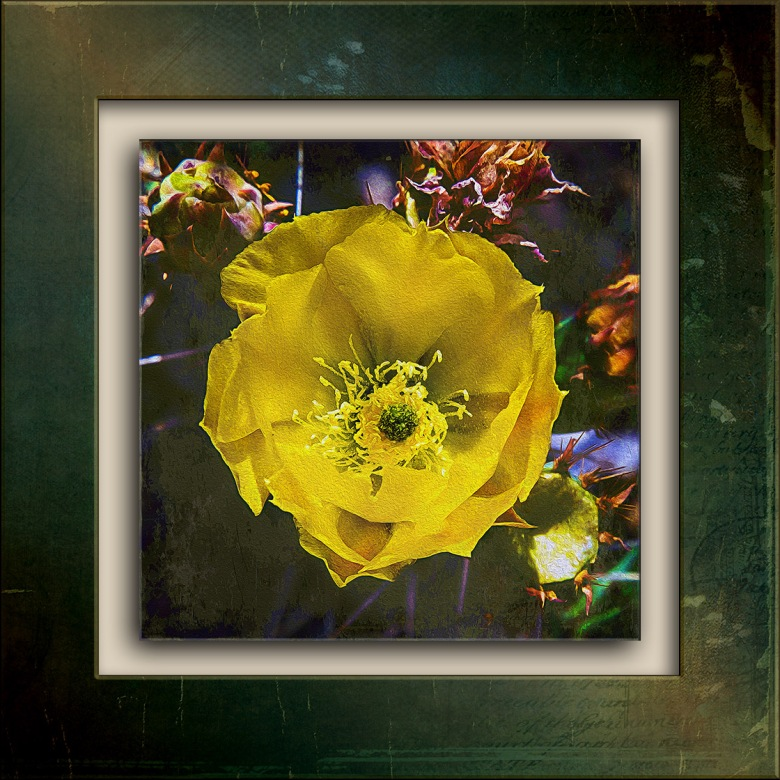 Prickly Pear Blossom-1263 art blog