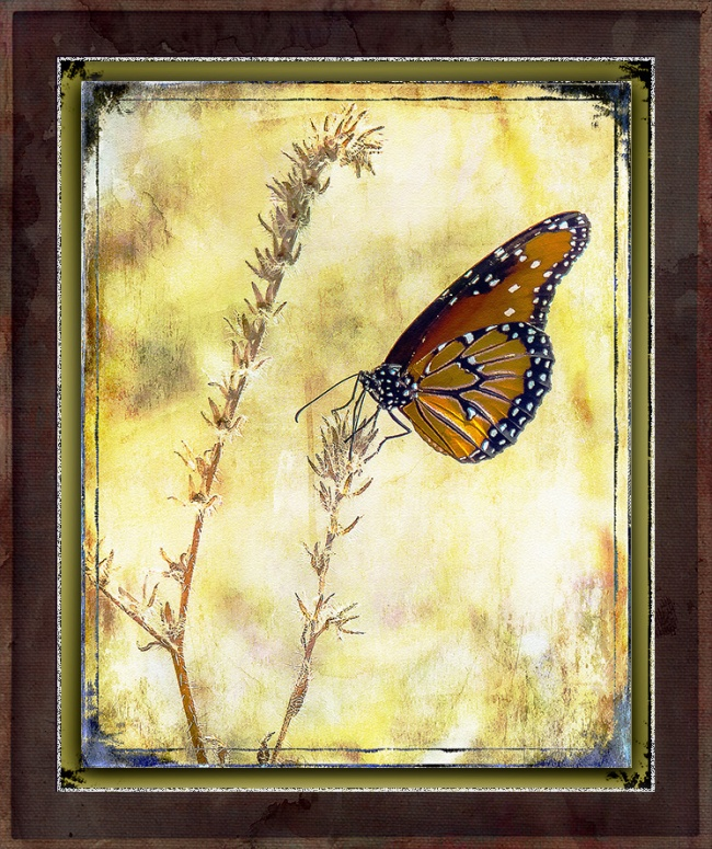 Queen Butterfly-1356 Art blog II