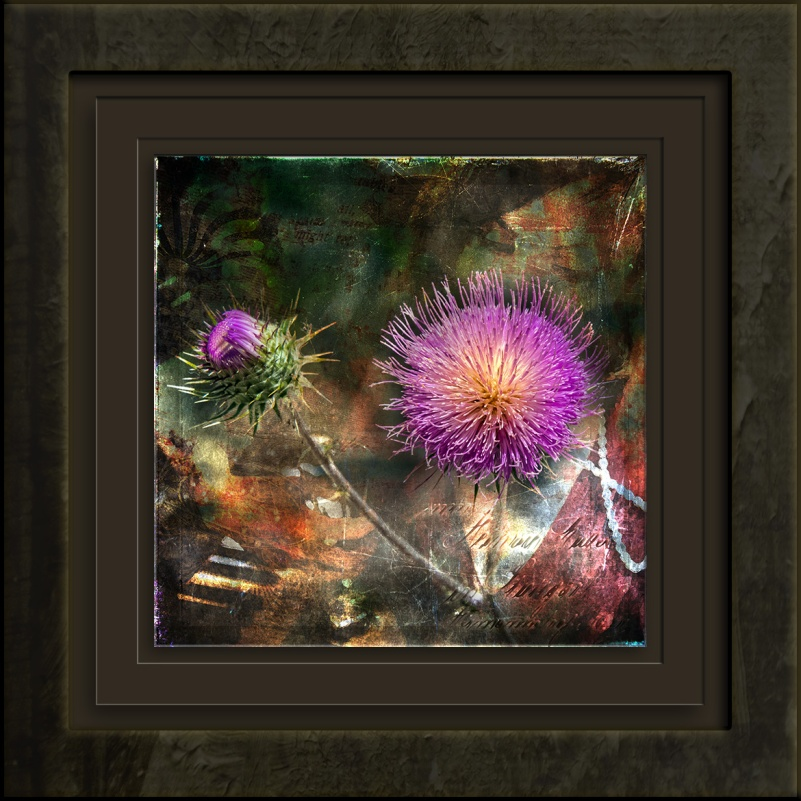 Thistle-1144 Art blog