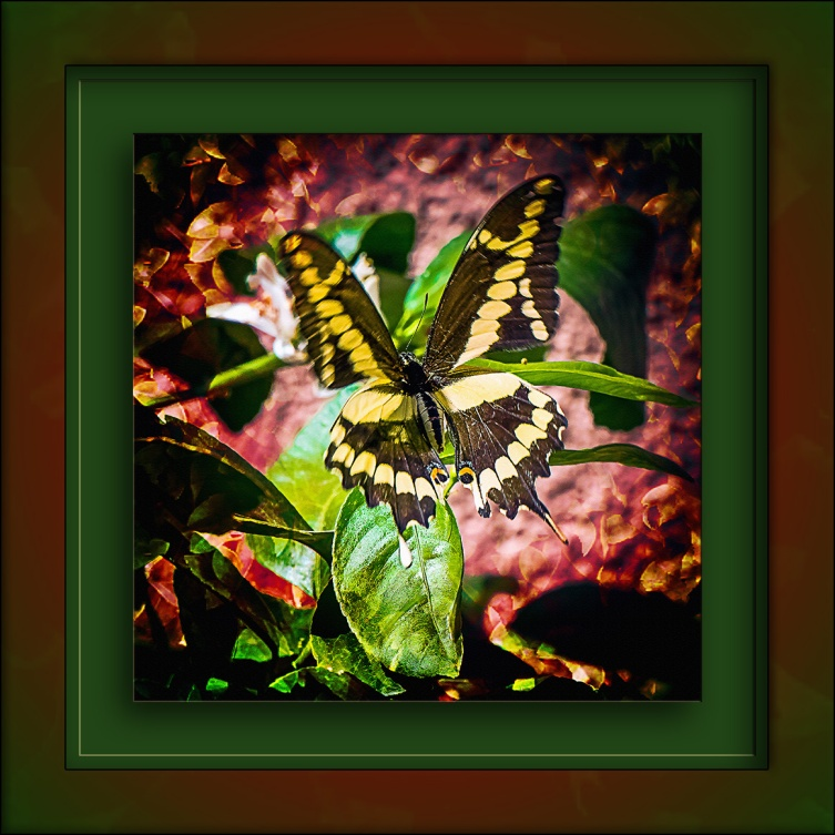 Two-Tailed Butterfly-1107 art blog