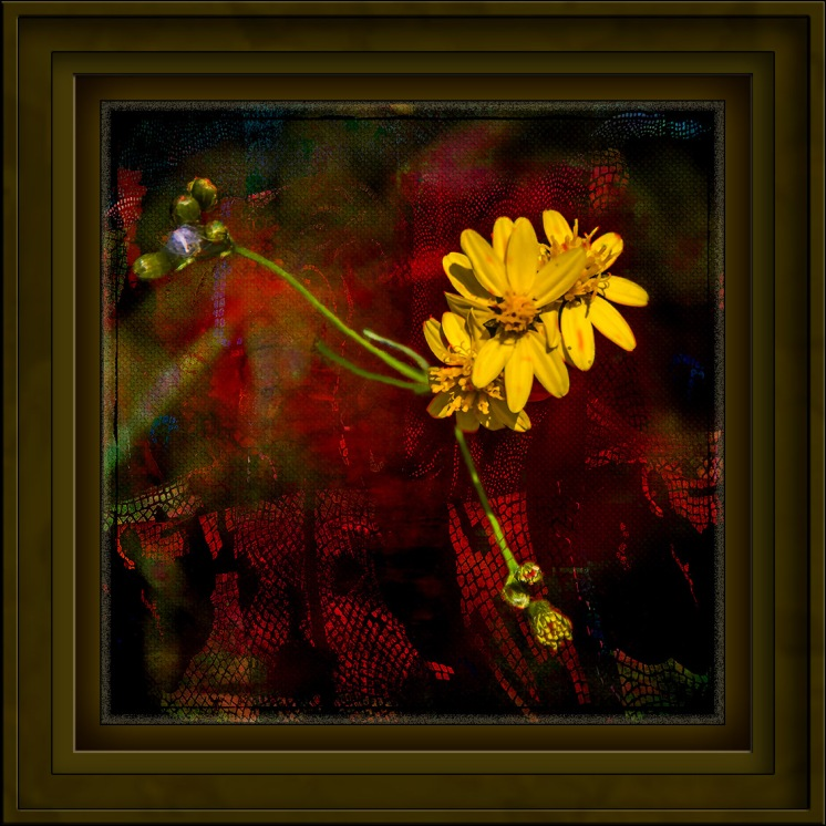 Yellow Wildflower-1257 Art blog II