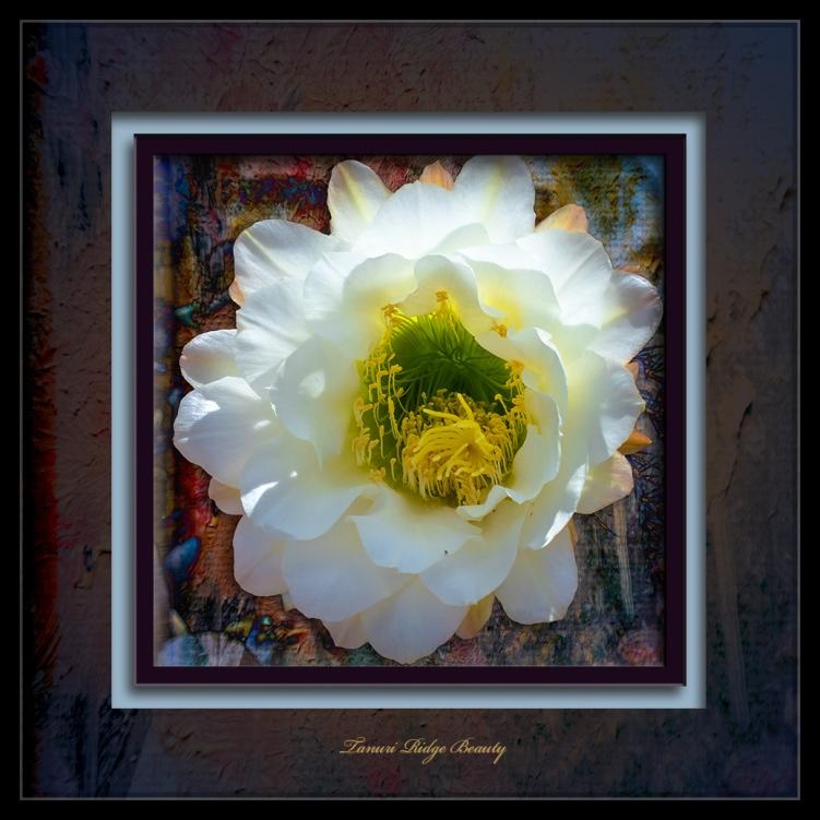 Cactus Blossom-1496 art blog