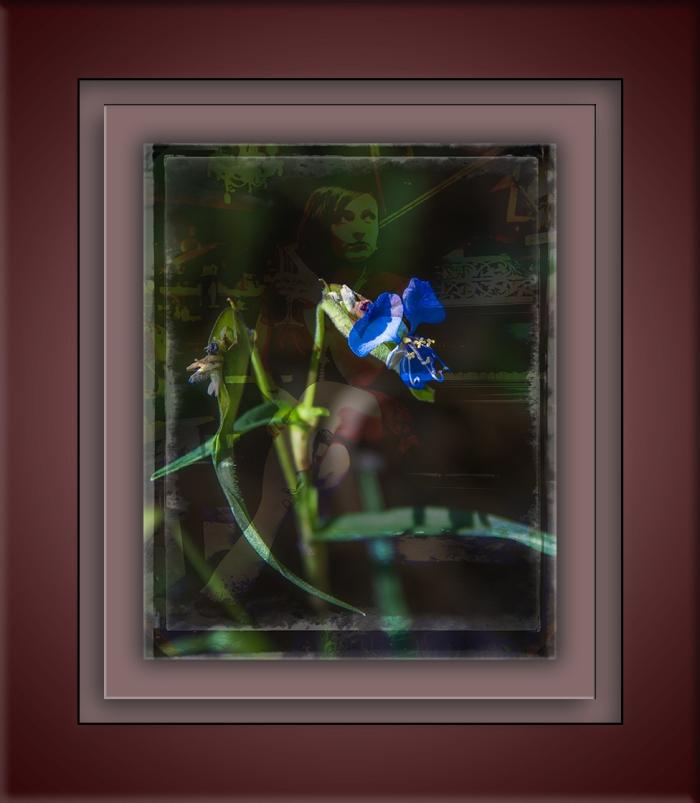 Dayflower-8524-art blog