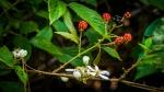 DSC_1592Blackberries