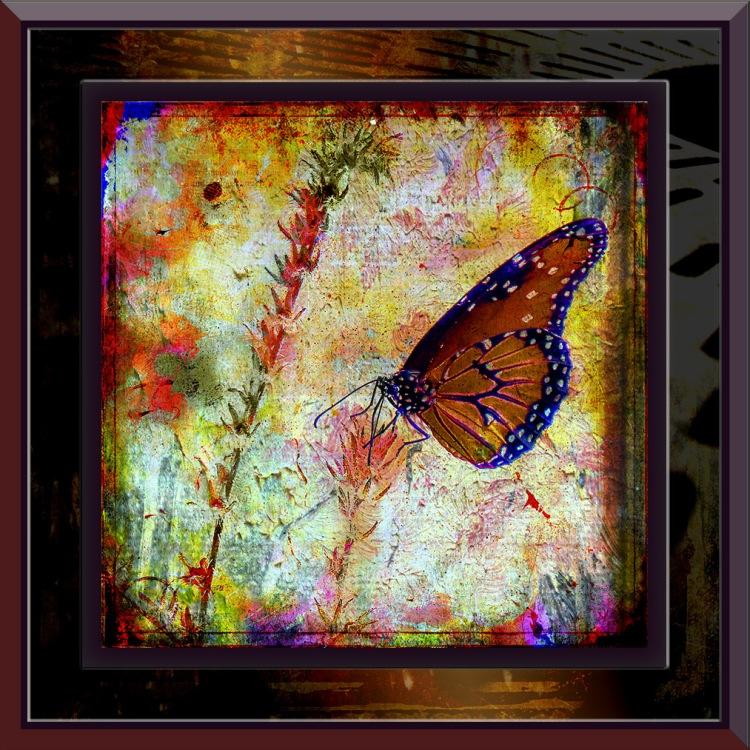 Queen Butterfly-1356 blog