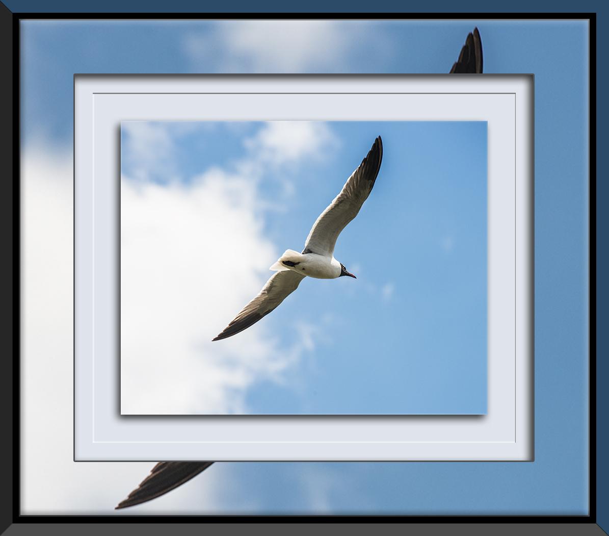 Sea Gull_2015 05 03_0490 blog