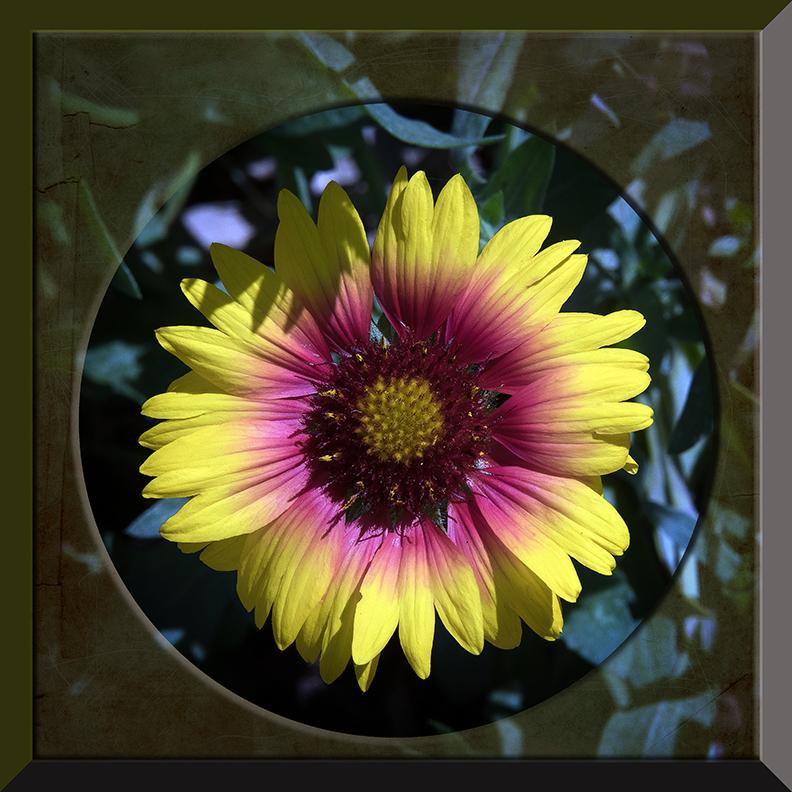 Balboa Park Flowers-1973 blog