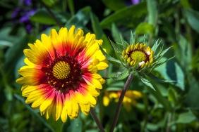 Balboa Park Flowers-1975-2 blog