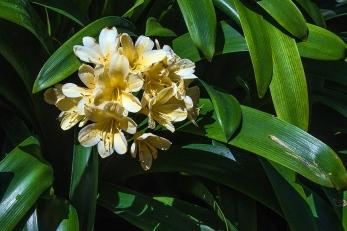 Balboa Park Flowers-1980 blog