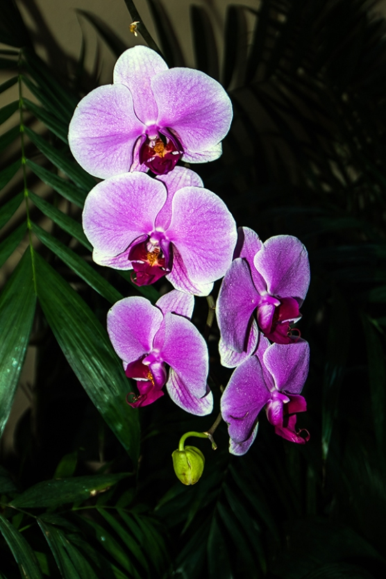 Balboa Park Flowers-2784 blog
