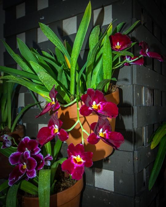 Balboa Park Flowers-2785 blog