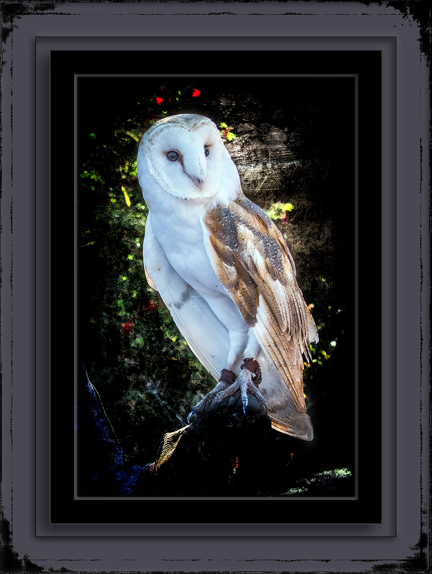 Barn Owl-0995 art blog