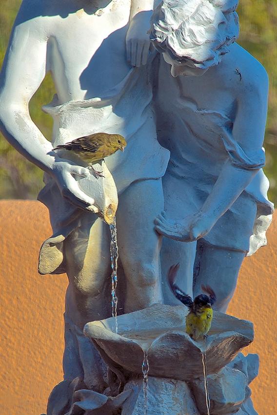 Patio Fountain