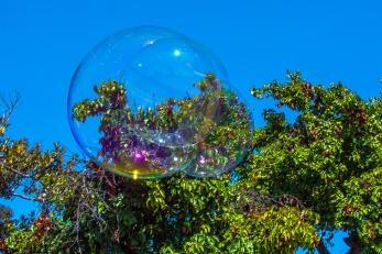 Bubbles-1967 blog