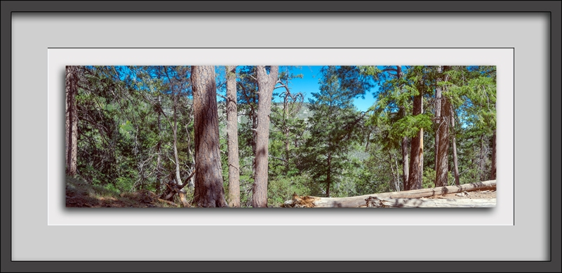Butterfly Trail Panorama--3 blog