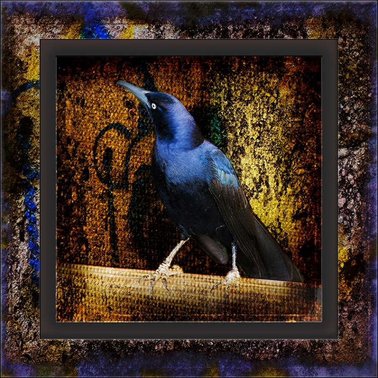 Great-tailed Grackle Grung Art blog