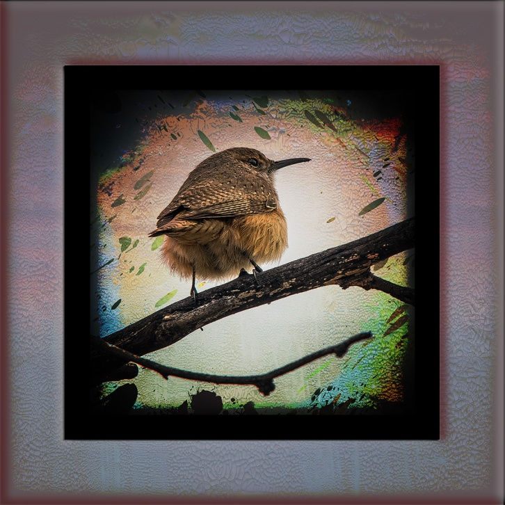 House Wren-0294 art blog