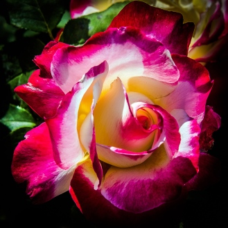 Rose Garden-1956 blog