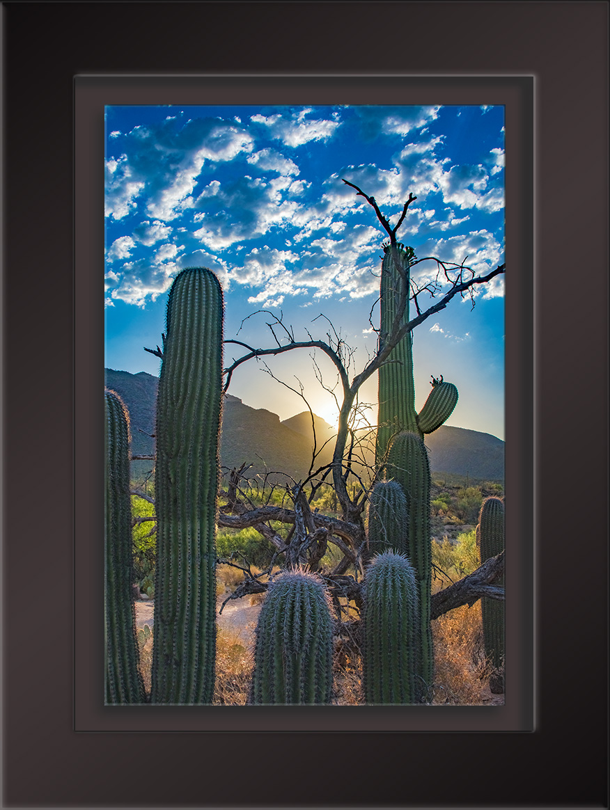 Sabino Canyon Sunrise-1708 blog