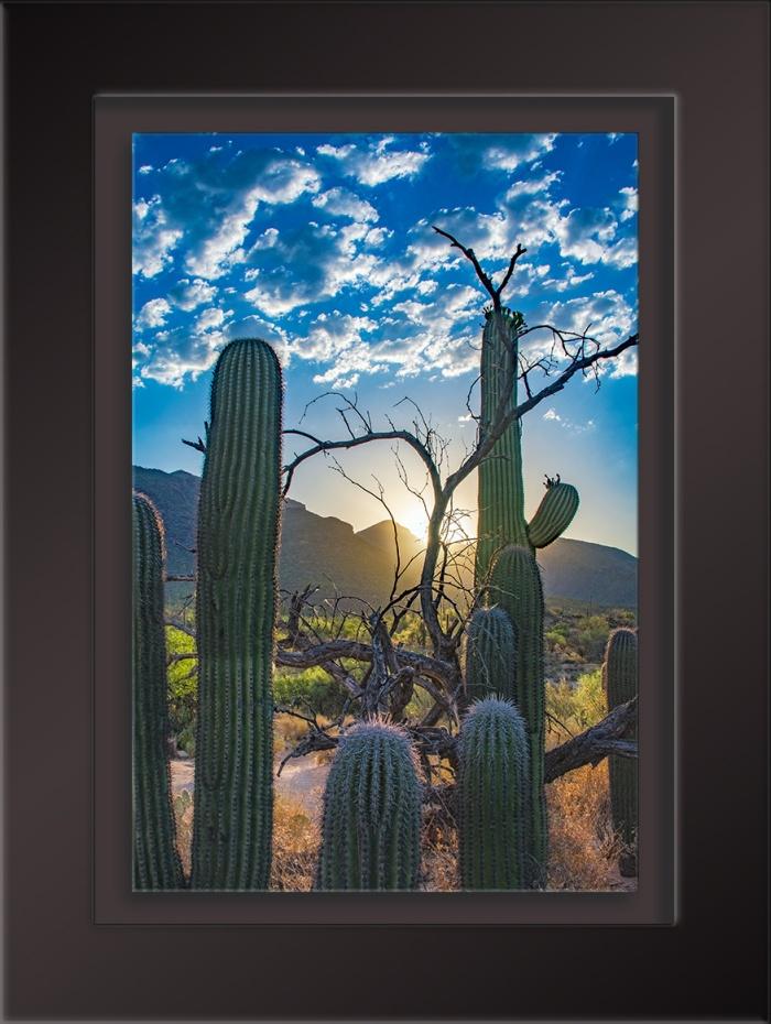 Sabino Canyon Sunrise-1708 blog