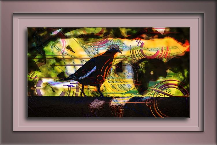 White-winged Dove Abstract Art(1 of 1)-9 blog