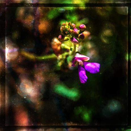 Wildflower (1 of 1) blog