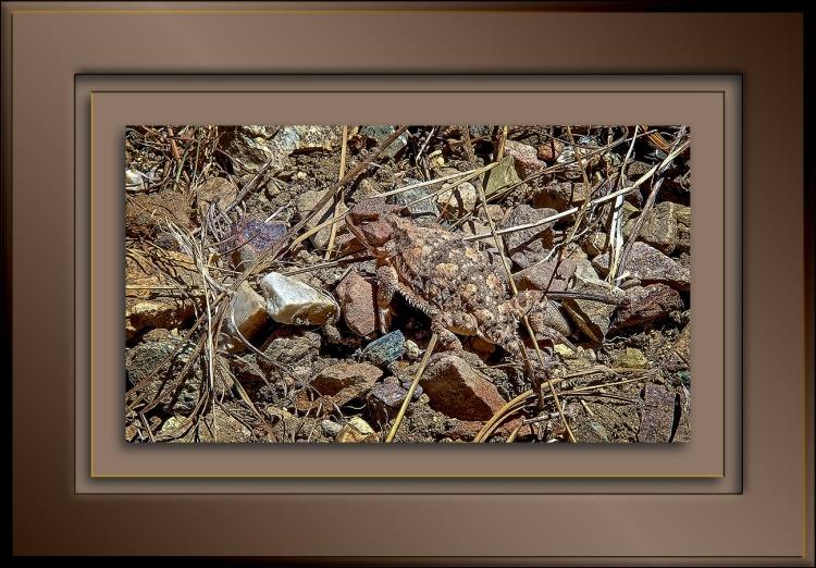 Mt. Lemmon Trail 06-24-13