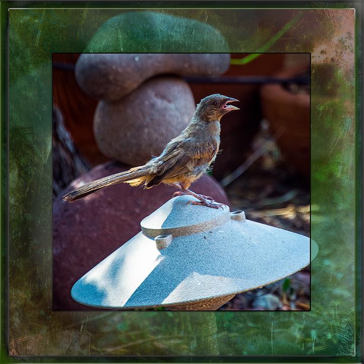 Hot Bird-2945-blog