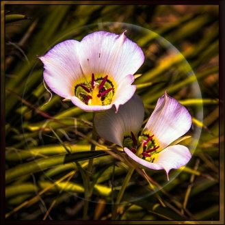 Mariposia Lily-1296 blog