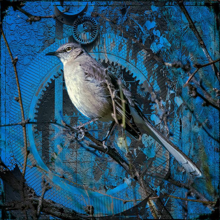 Mockingbird-0650 art blog