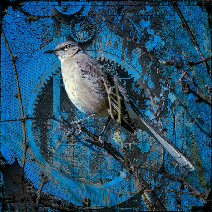Mockingbird-0650 art blog
