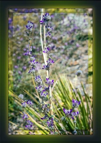 Oakwoods prairie clover-1301 blog