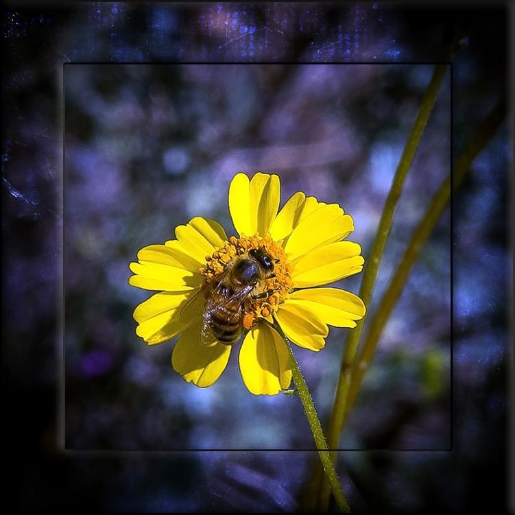 Ragleaf bahia & Bee blog