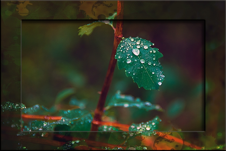 Raindrops-0020 blog