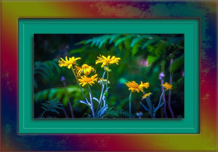 Sneeze Weed-2891 blog