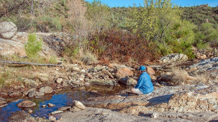 Sonoran Toads-2964 blog