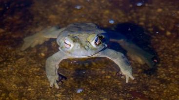 Sonoran Toads-2979 blog