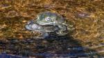 Sonoran Toads-2991 blog